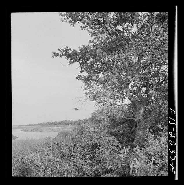 Parris Island, South Carolina. A scene near the U.S. Marine Corps glider detachment training camp