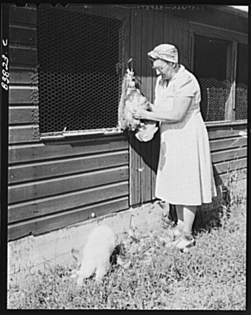 Plainfield, Connecticut (vicinity). Wife of Finnish farmer