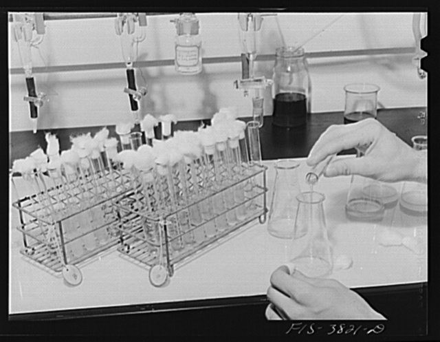 Pouring sample to be used in microbiological titration of vitamins in dehydrated vegetables. Regional agricultural research laboratory, Albany, California