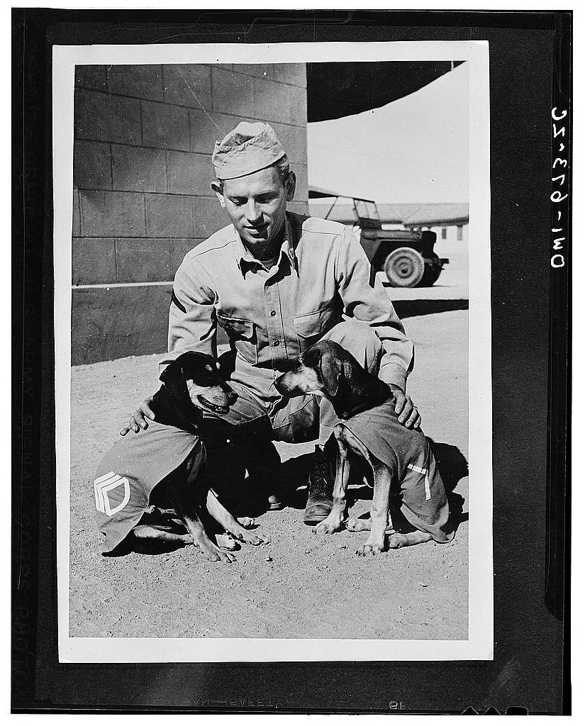 """Private First Class Norman Diamond of Brooklyn, New York gives a congratulatory pat to """"Staff Sergeant Basic"""" and """"Private First Class Adler,"""" who have just received promotions under authority of DL (Dog Land) regulation 0000-900. They are mascots of a U.S. Signal Service company somewhere in India"""