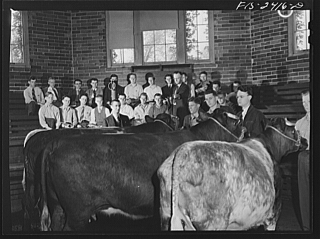 Professor A.F. LaGrange with his sophmore class in animal husbandry. They are examining some purebreed shorthorns in their study of breeds of cattle. Out of his class of thirty-two, only six do not live on farms. About half the class came from outside the state of Iowa. Some of the states represented are Massachusetts, Georgia, Dakotas, Texas, Kentucky, Illinois, etc. Iowa State College, Ames, Iowa