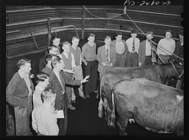 Professor A.F. LaGrange with his sophomore class in animal husbandry. They are examing some purebreed shorthorns in their study of breeds of cattle. Out of his class of thirty-two, only six do not live on farms. About half the class come from outside the state of Iowa. Some of the states represented are Massachusetts, Georgia, Dakota, Texas, Kentucky, Illinois, etc. Iowa State College, Ames, Iowa