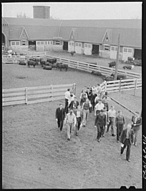 Professor A.F. LaGrange's sophomore class in animal husbandry. They are just returning from a pen of Aberdeen Angus heifers which is part of their study on breeds of cattle. Iowa State College. Ames, Iowa