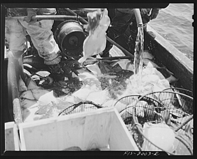 Provincetown, Massachusetts. Aboard the Frances and Marion, a Portuguese drag trawler off Cape Cod. After unmarketable fish have been thrown overboard, the catch is washed down with saltwater and iced in the hold