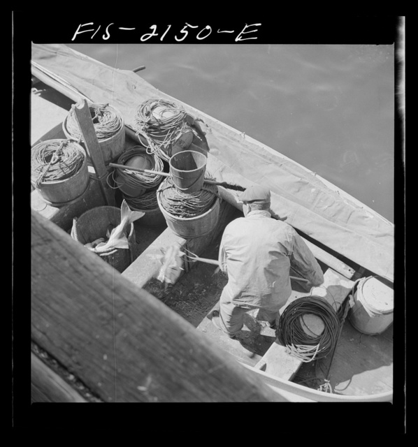 Provincetown, Massachusetts. Loading fish into tubs to be hoisted aloft from a Portuguese dory to the commercial pier