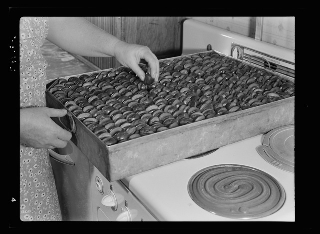 Prunes in tin dryer on top of an electric stove where they will stand for twenty-four to thirty-six hours