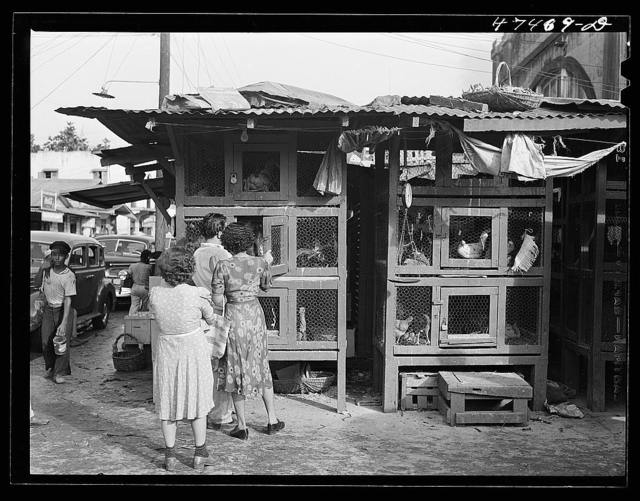 Rio Piedras, Puerto Rico. Purchasing chickens at the produce market