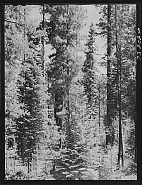 Rogue River National Forest, Douglas County, Oregon