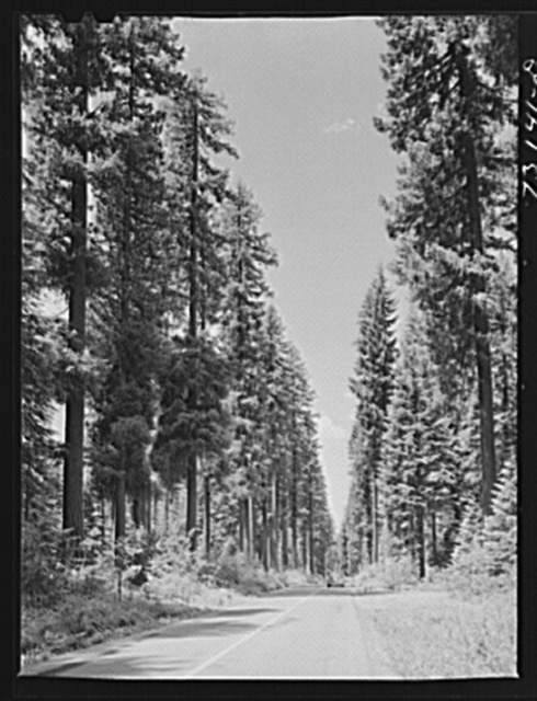Rogue River National Forest, Klamath County, Oregon. Highway running through tall trees
