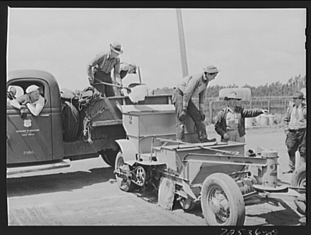 Salinas, California. Pouring sand into guayule planter at the nursery. The guayule project is under the supervision of the U.S. Forest Service