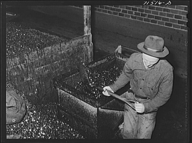 Shoveling olives into hand truck at olive oil plant. Lindsay, California
