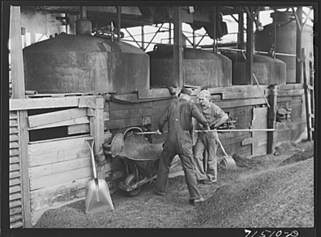 "Shoveling out pomace from tanks where the ""soap"" oil has been extracted by means of a solvent. This pomace has some value as a fertilizer. About five percent of the total oil content of olives is ""soap"" oil. Strathmore, California"