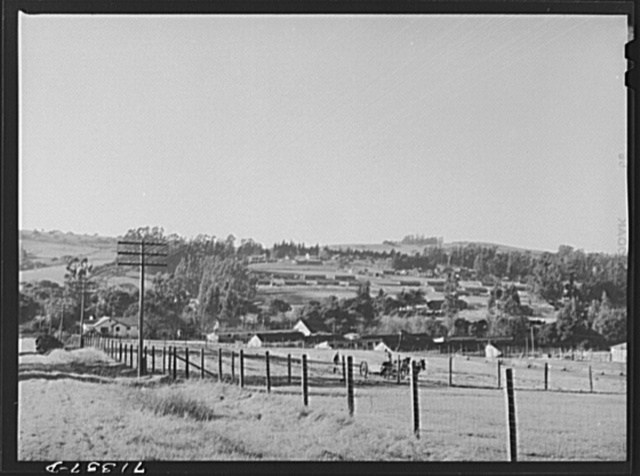 Sonoma County, California. Chicken houses dot the low, rolling hills here, where eggs are produced on a large scale