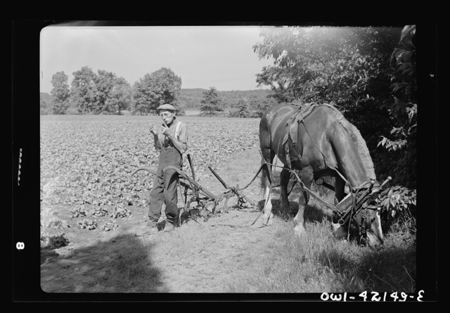 Southington, Connecticut. Gus Worke lighting his pipe after ploughing a field of lettuce. He came from Germany forty years ago; expecting to get rich, he said. He didn't find material riches but did come into a life rich in personal freedoms