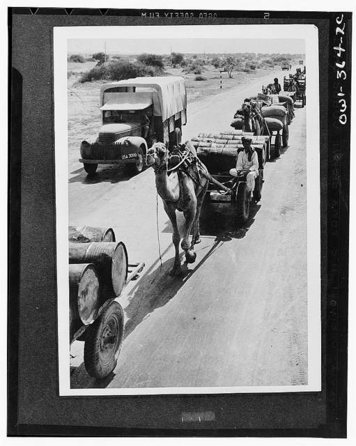 The old and the new meet on a military highway in India. Though motor transports carry much of the supplies, the camel, which has been the beast of burden from time immemorial, is drafted to do his part in the war effort also