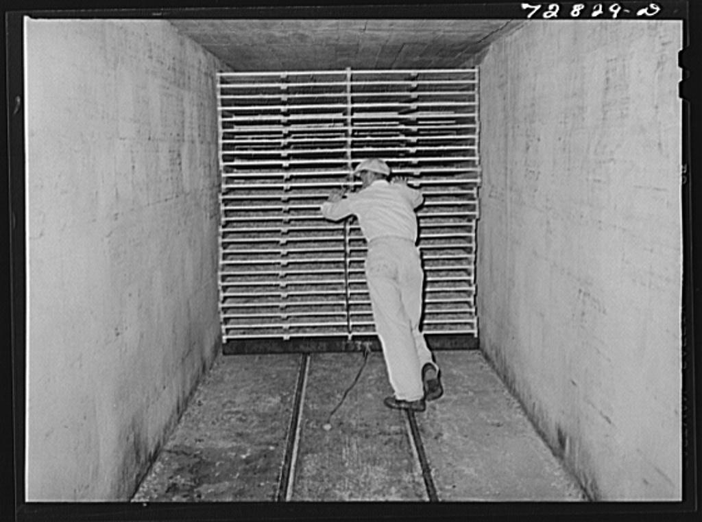 Turlock, California. Pushing racks of cabbage into drying tunnel at dehydrating plant