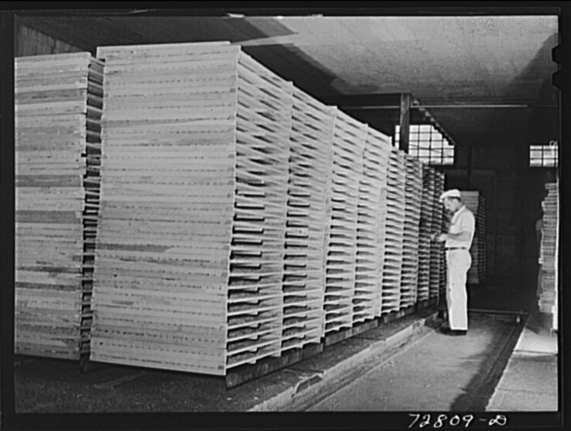 Turlock, California. Racks of cabbage which will be dried in tunnel. Dehydrating plant