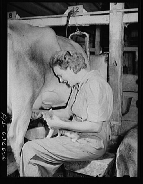 Vernon County, Wisconsin. Edward Saugstad and pet kitten
