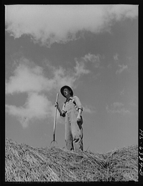Vernon County, Wisconsin. Edward Saugstad on haystack surveying 160 acre farm his grandfather homesteaded in 1860
