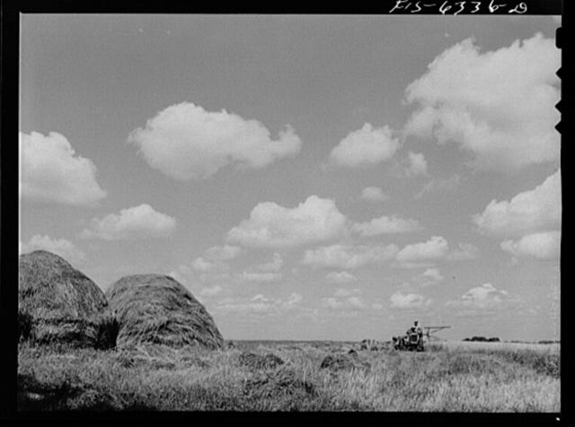 Vernon County, Wisconsin. Harvesting wheat on the Saugstad farm