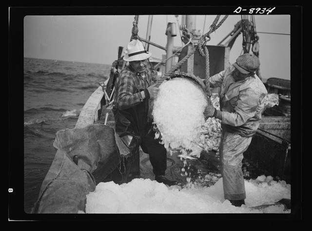 Victory food from American waters. Crew members throw overboard excess ice from Old Glory's hold. Fishmen allow a proportion of one ton of ice to three tons of fish. When the catch is unusually large as on this trip, some ice is removed to make room for the fish