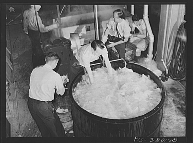 Washing cabbage which will by dehydrated. Regional agricultural research laboratory, Albany, California