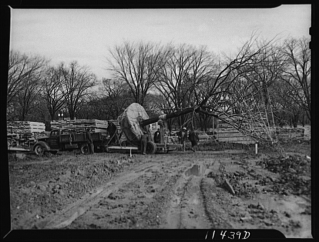 Washington, D.C. Construction of temporary war emergency buildings on the Mall, near 16th and 17th Streets, N.W. Trees being moved on a truck to make way for buildings