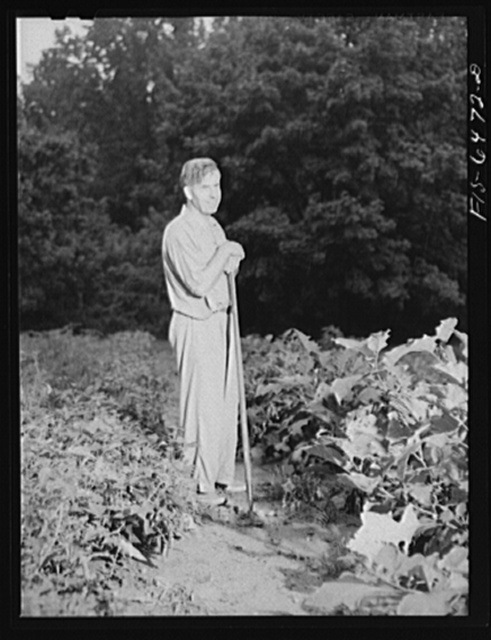 Washington, D.C. Vice President Henry A. Wallace in his victory garden
