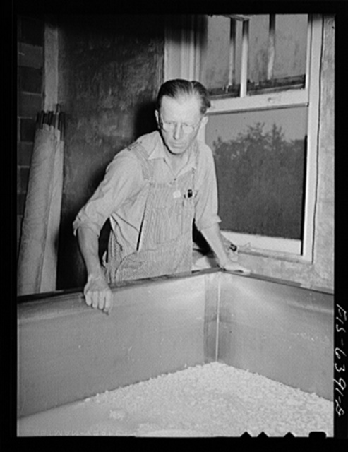 Westby, Vernon County, Wisconsin. Edward Saugstad watching cheese manufacturing at the cooperative creamery
