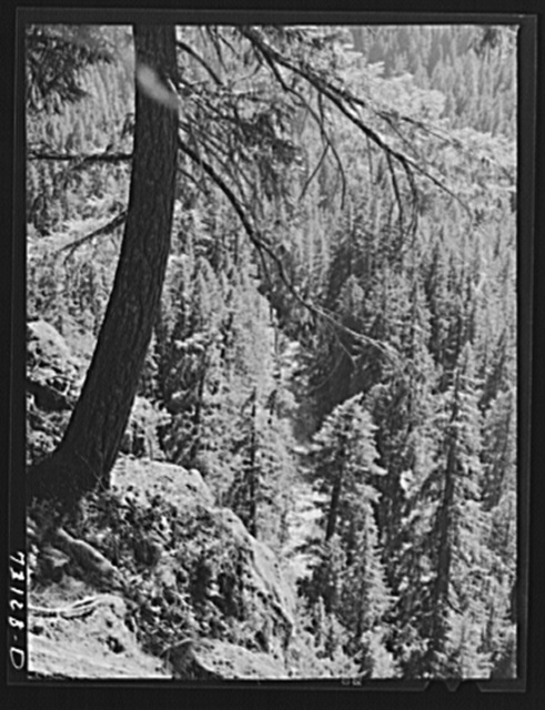 Willamette National Forest, Linn County, Oregon. Wooded mountains. The McKenzie River can be seen through the trees