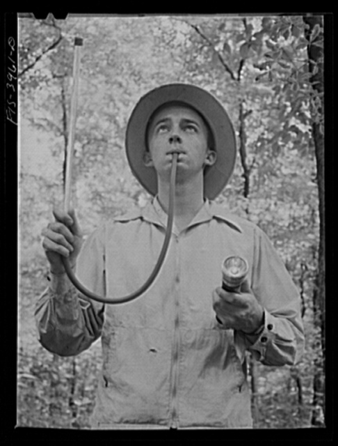 Wilson Dam, Alabama (Tennessee Valley Authority (TVA)). Collecting anopheles mosquitoes in malaria control area