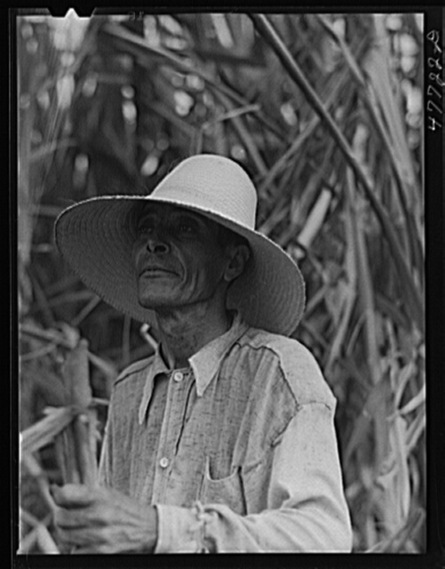 Yauco, Puerto Rico (vicinity). Farm laborer who was cutting sugar cane in a field