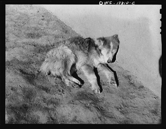 A dog lying in the sun against an adobe wall in New Mexico