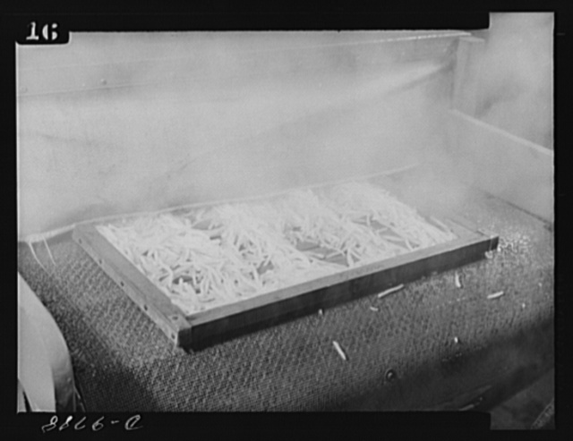 Dehydration. Potatoes. Blanched potatoes move off the conveyor belt of a steam blancher at the Western Regional Research Laboratory in Albany, California. After four to five minutes in the blancher the vegetables are ready to be placed in the dehydrator