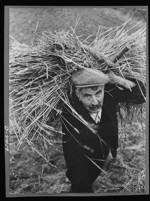 Food in Britain. Age is no obstacle to war work in Britain. Harry Kind, a sergeant during the Boer War, now seventy-one years old, works a full farming day. Here he is about to thatch a hay-rick. Approximately 700,000 old-age pensioners have braced themselves for fresh effort and gone into war work. The pretty village of Manuden, Essex, has a whole community of old age pensioners working on the land