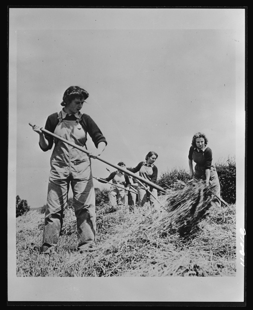 Food in England. The British Women's Land Army swings into action. Shown here at haymaking, these typists, clerks and salesgirls are helping during the crop season to supply England with much-needed food