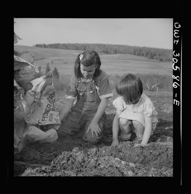 Fort Kent, Aroostook County, Maine. Spring potato planting on the French Acadian farm of Leonard Gagnon. Marianne and Dolores Gagnon setting fire to a pile of empty fertilizer sacks