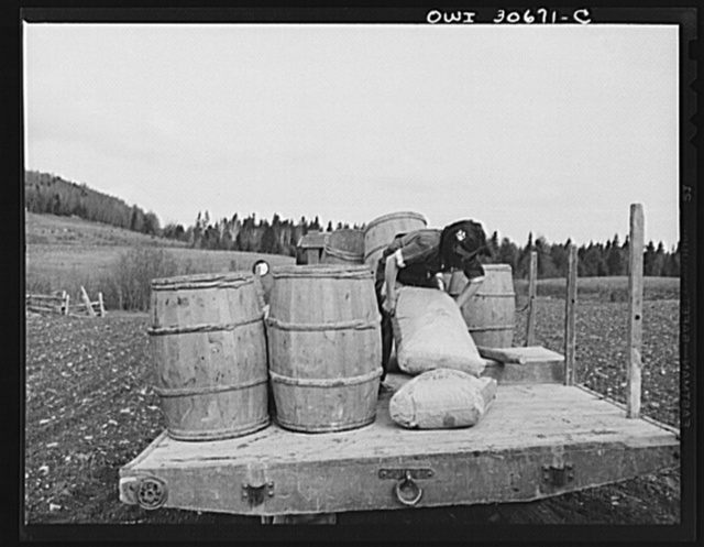 Fort Kent, Aroostook County, Maine. Spring potato planting on the French Acadian farm of Leonard Gagnon. Marianne Gagnon, the farmer's daughter, lifting potato fertilizer before dumping it into a seeder