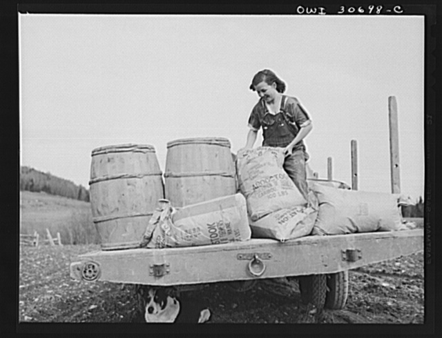 Fort Kent, Aroostook County, Maine. Spring potato planting on the French Acadian farm of Leonard Gagnon. Marianne Gagnon lifting potato fertilizer before dumping it into a seeder