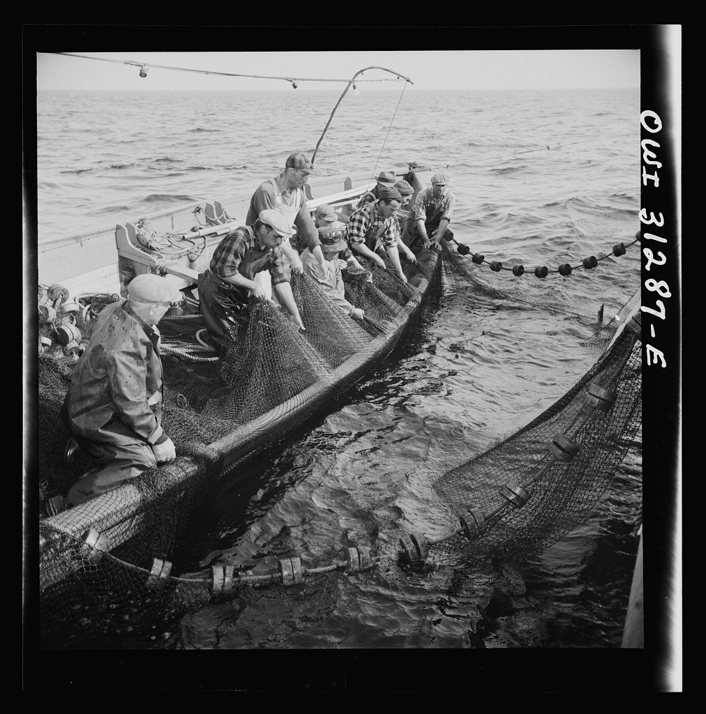 Gloucester fishermen pulling in their nets to bring their catch nearer to the surface so the dip net can transfer them to the big boat. Gloucester, Massachusetts