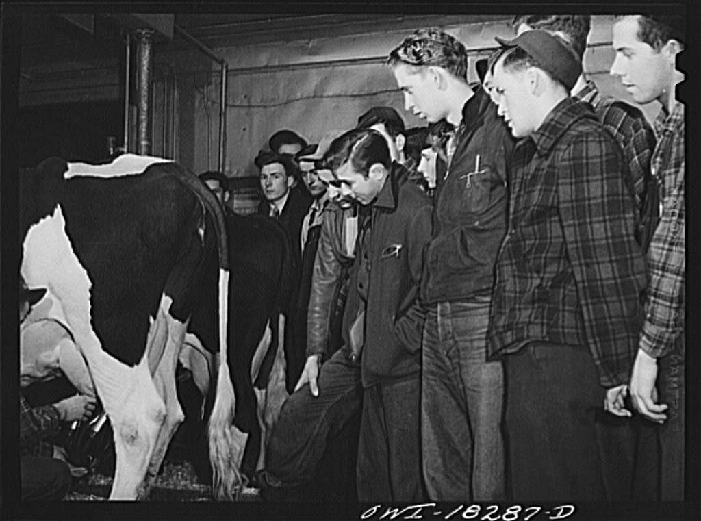 Madison, Wisconsin. Farm short course school at the University of Wisconsin. Students in the dairy husbandry class watching a demonstration of a milking machine