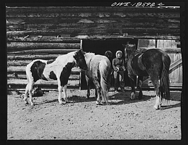 "Moreno Valley, Colfax County, New Mexico. Daughters of George Mutz, a second generation cattle rancher, ""saddling up"" their mounts"