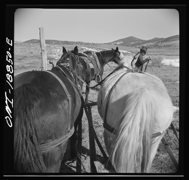 Moreno Valley, Colfax County, New Mexico. Opening a gate on William Heck's ranch