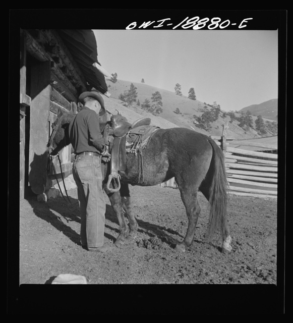 "Moreno Valley, Colfax County, New Mexico. William Heck ""saddling up"" his horse"