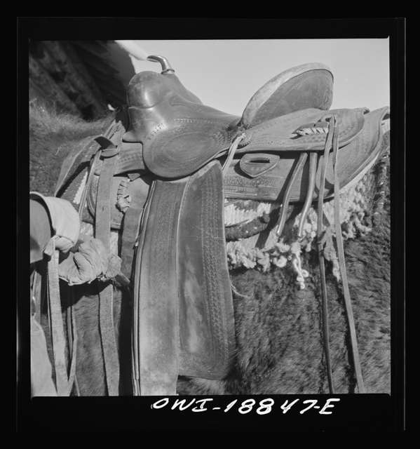Moreno Valley, Colfax County, New Mexico. William Heck tightening the cinch on a Mexican saddle