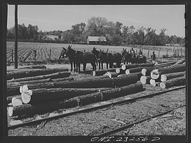 Nacogdoches County, Texas. Sawed logs brought to railroad siding by mule teams