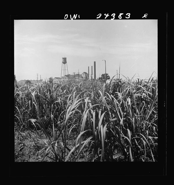 New Iberia, Louisiana. Sugar refinery