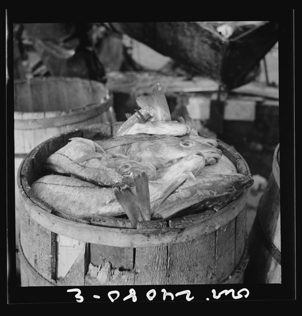 New York, New York. Barrels of codfish