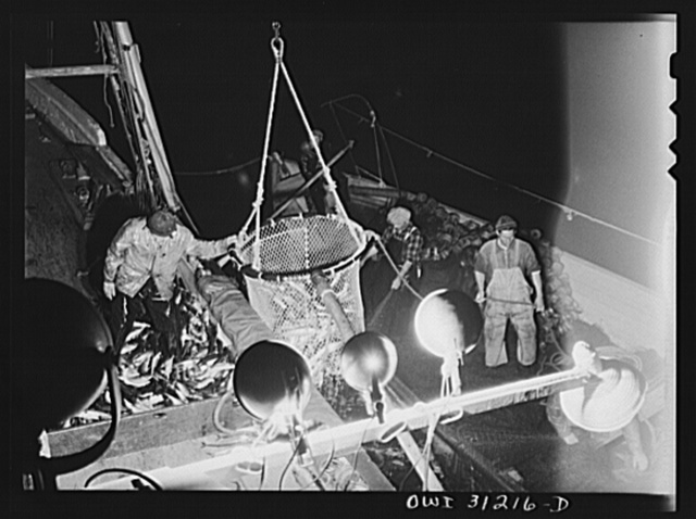 On board the fishing boat Alden, out of Gloucester, Massachusetts. After the seining net is pulled in with its catch, the mother boat pulls alongside, and the skipper and the cook help lash the big net to its railing. Here a large dip net scoops the fish from the nets to the decks