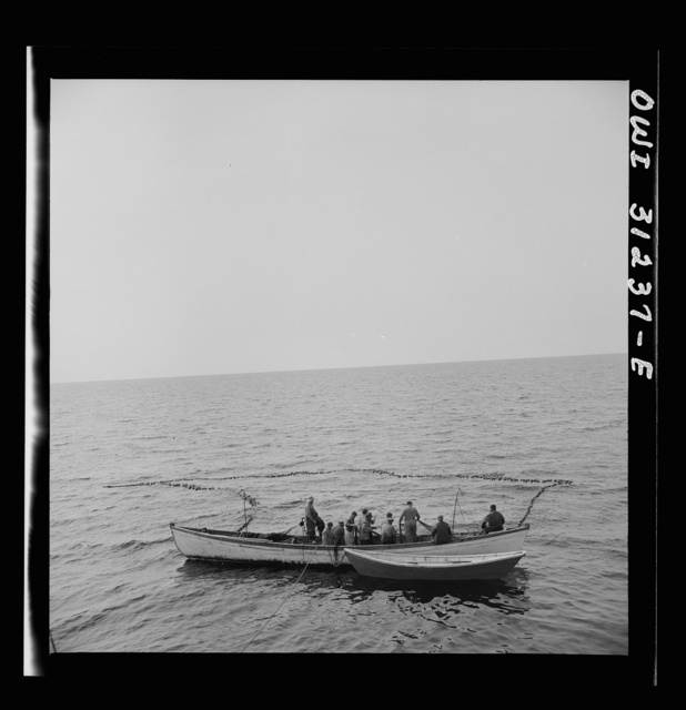 On board the fishing boat Alden, out of Gloucester, Massachusetts. Fishermen pulling in their net, in which they hope to have trapped a school of mackerel. The big boat stands by ready to go alongside and receive the catch on her decks